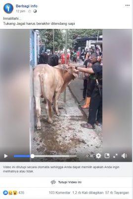 [SALAH] Video Jagal Sapi Meninggal Ditendang Sapi Qurban