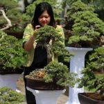 WOW... Pameran Bonsai di Bali Tembus Puluhan Miliar Rupiah