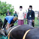 Gubernur Sumsel, Herman Deru saat meninjau pemotongan hewan qurban, kemarin.