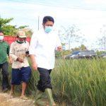Kemiskinan Di Sumsel Turun, Buah Kerja Keras Herman Deru Di Tengah Pandemik